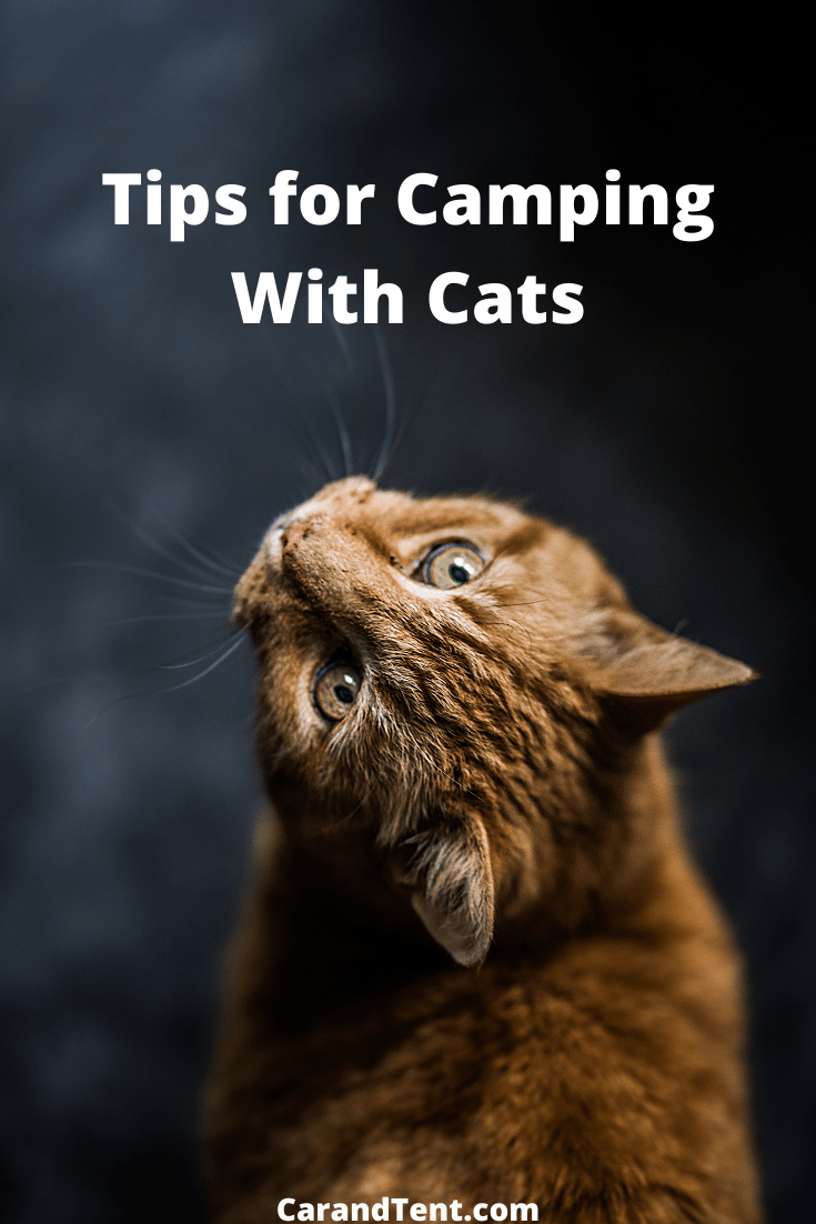 Tips for Camping With Cats pin4