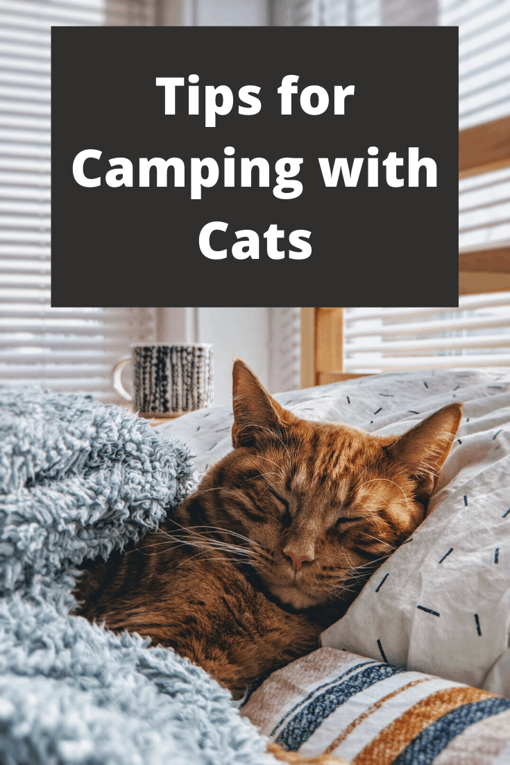 Tips for Camping with Cats pin3