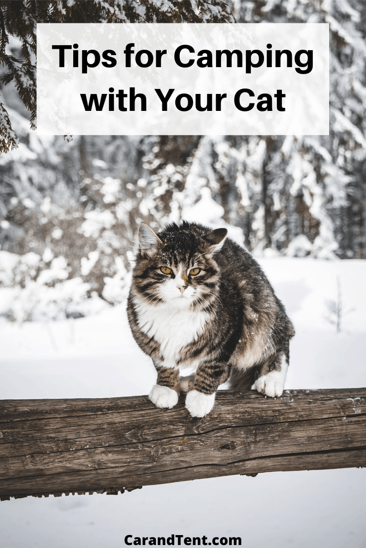 tips for camping with your cat graphic pin