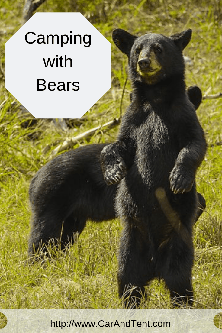 camping with bears