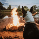 camping with dogs feature image