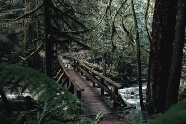 hiking bridge