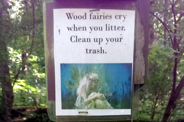 wood fairies cry