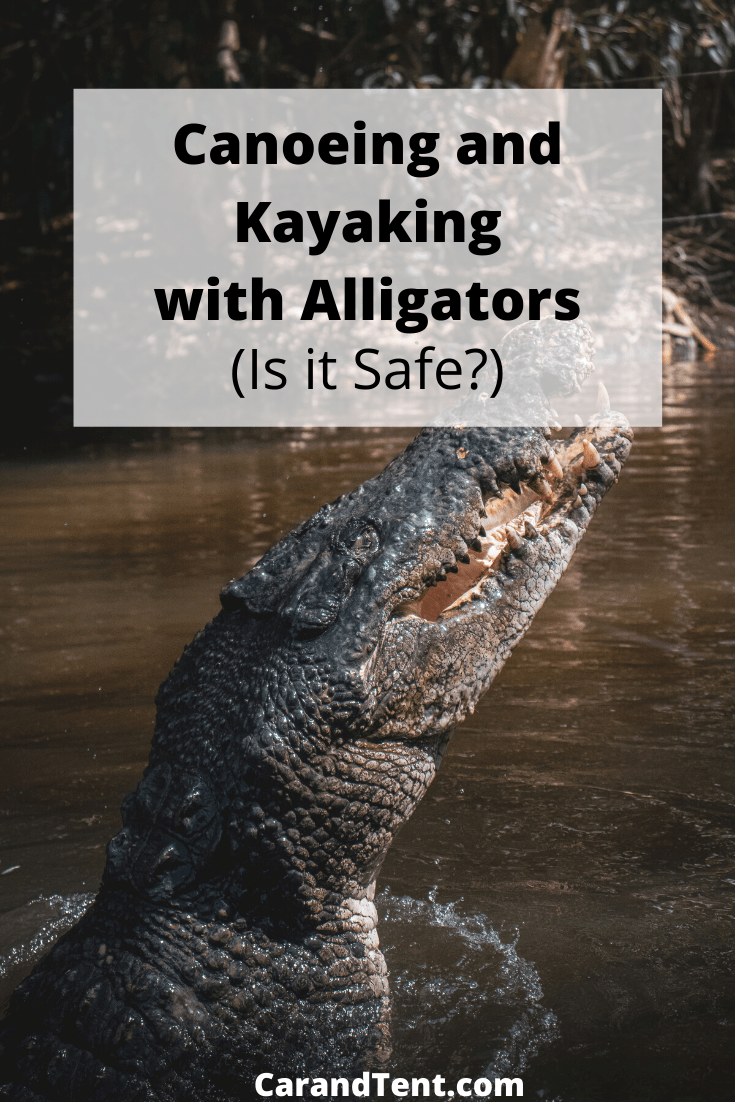 canoeing and kayaking with alligators pin2
