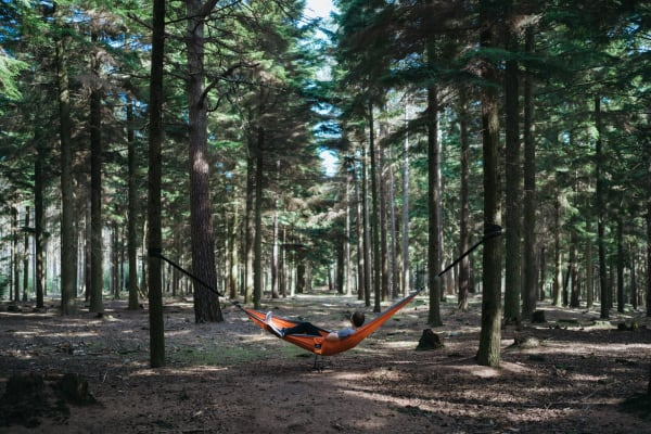 camping in a hammock