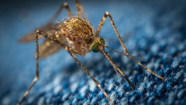 mosquito on camping equipment